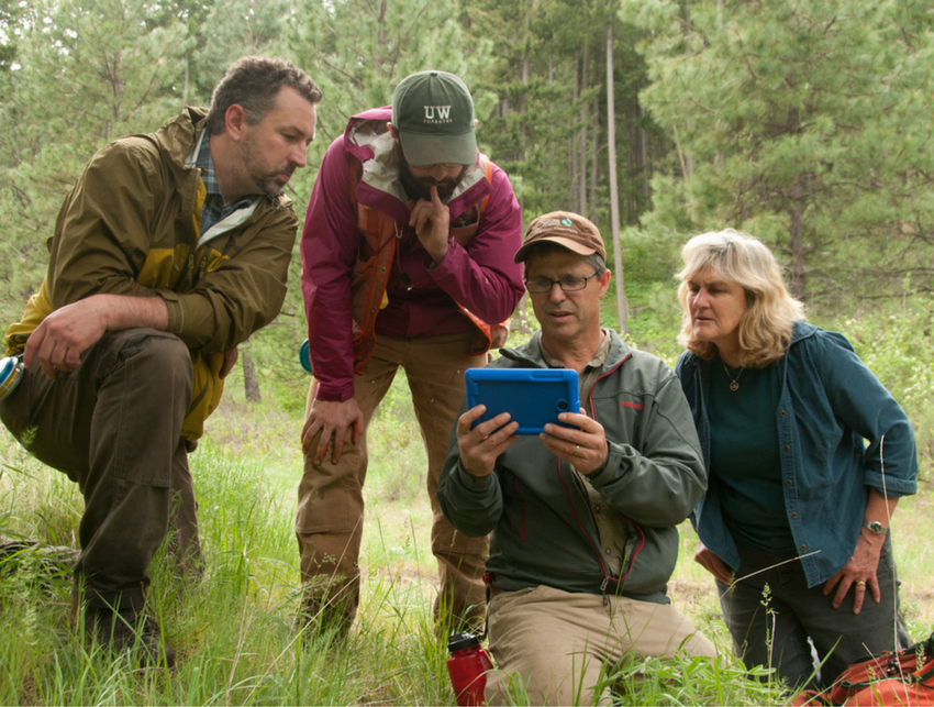 Image of four foresters looking at a hand-held device together in the woods