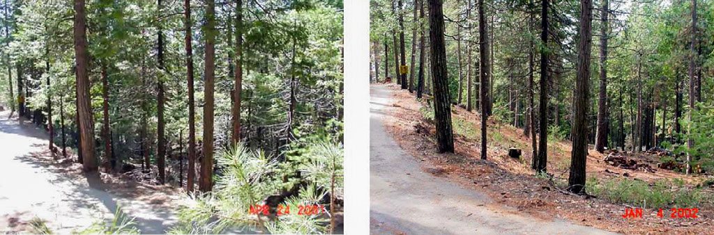 A before and after of a shaded fuel break on the Shasta-Trinity National Forest. Shaded fuel breaks are designed to slow the fire's spread and give fire crews places to suppress a wildfire. Photo courtesy of the Shasta-Trinity National Forest.