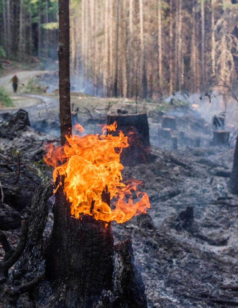 Image of tree stump on fire