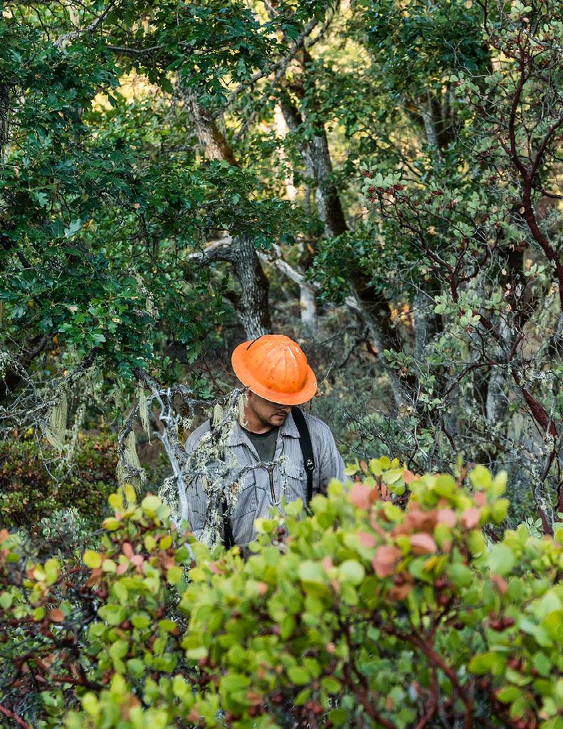 Image of forester wearing orange helmet in the woods