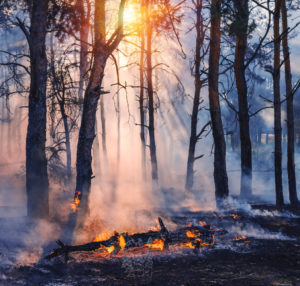 Image of fallen tree on fire in the middle of the woods