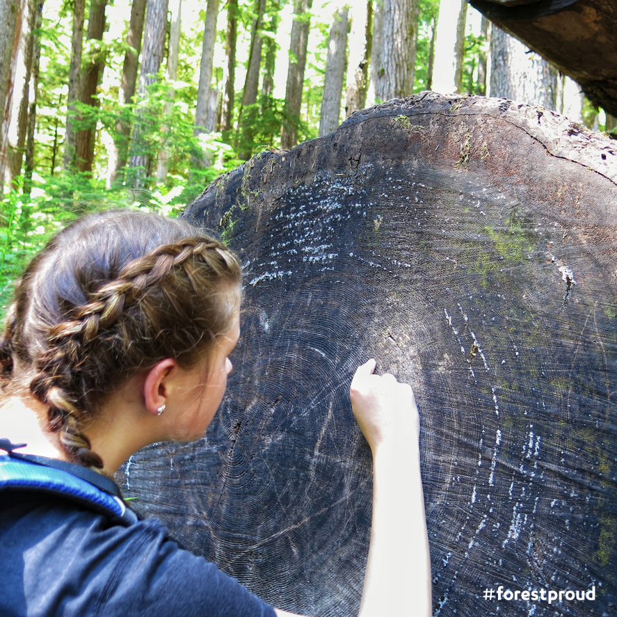 Image of summer camp teenage girl counting tree rings while hiking in forest.