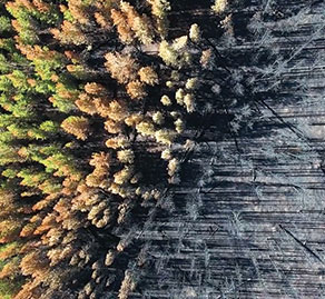 Image of tree tops from the sky