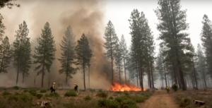 Image of fire burning among trees