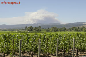 Image of Butts Fire in Pope Valley over shadows the vineyards and winerys of Californias Napa Valley