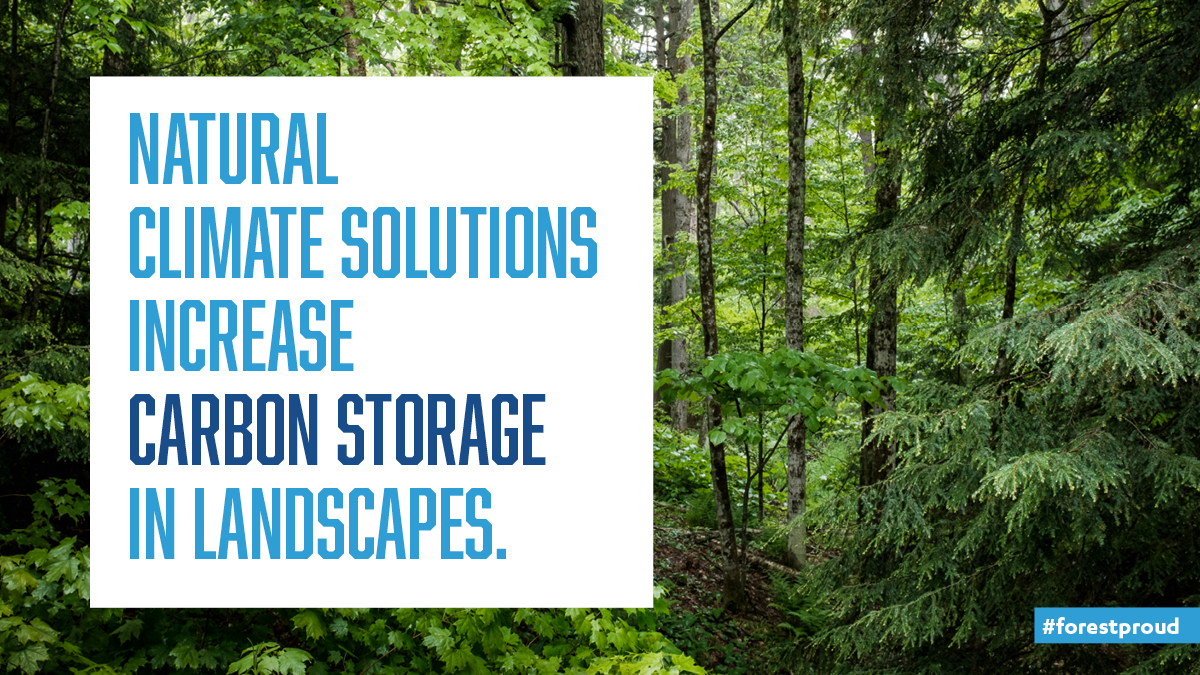 Natural climate solutions increase carbon storage in landscapes