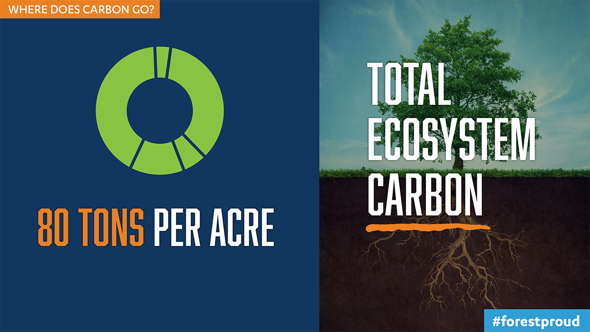 Where Does Carbon Go?