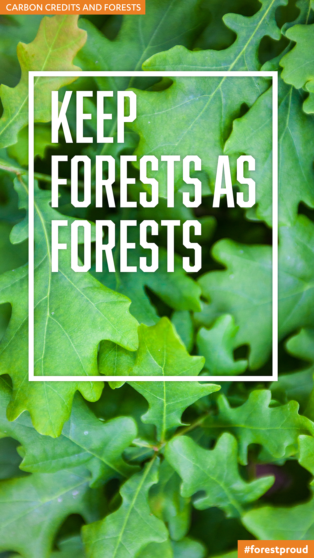 Carbon Credit Basics: Types of Forest Offset Projects