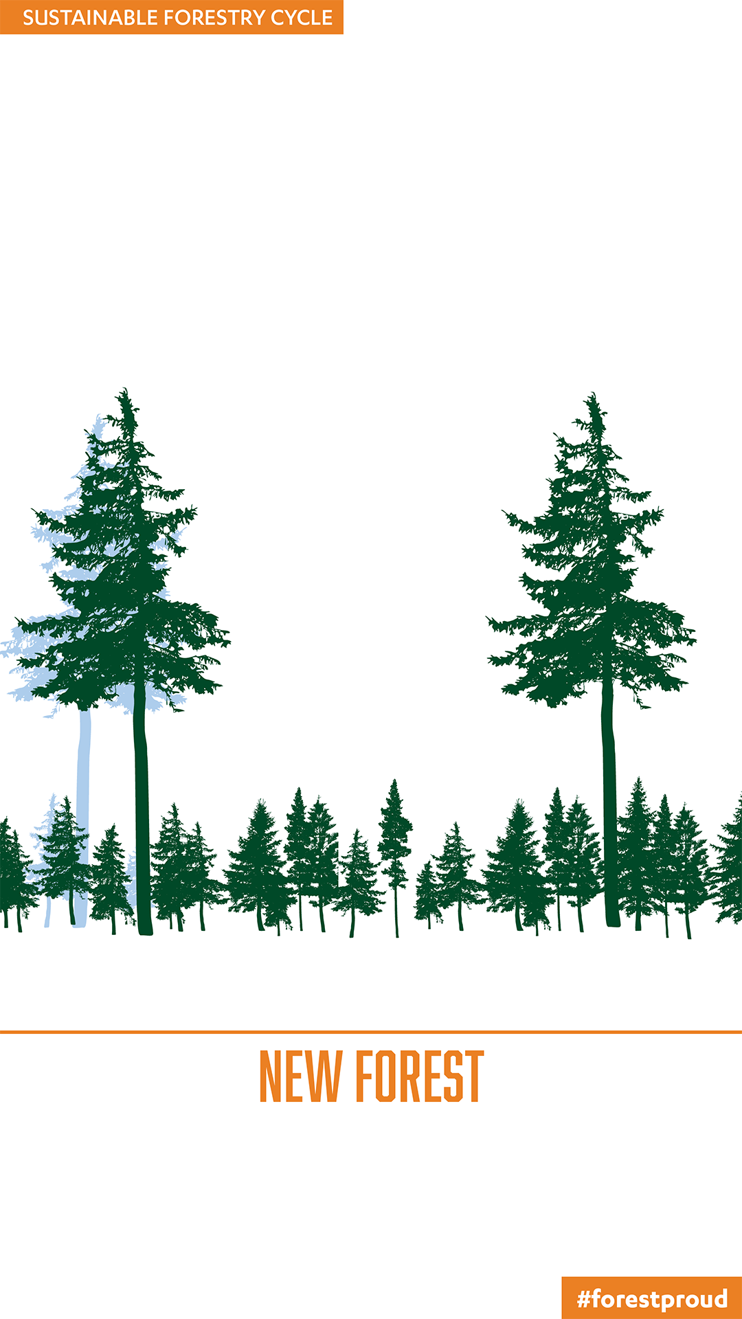 The Sustainable Forestry Cycle