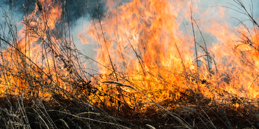 Image of brush on fire